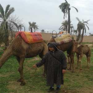 balade-chameau-Marrakech