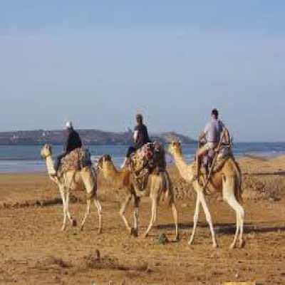 Balade chameau Essaouira