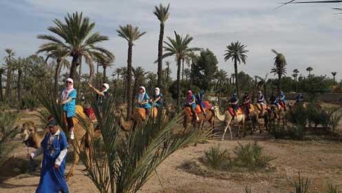 Balade chameau marrakech