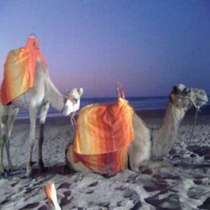 balade-en-chameau-Essaouira