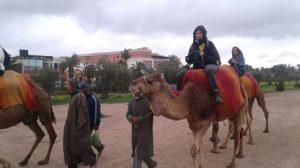 balade-chameau-jardin-Menara