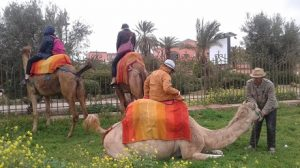 balade-chameau-jardin-Menara-Marrakech