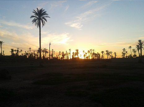 Excursion dromadaire au coucher du soleil Palmeraie