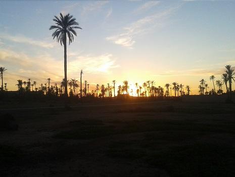 Balade à dos de Dromadaire au coucher du soleil palmeraie Marrakech