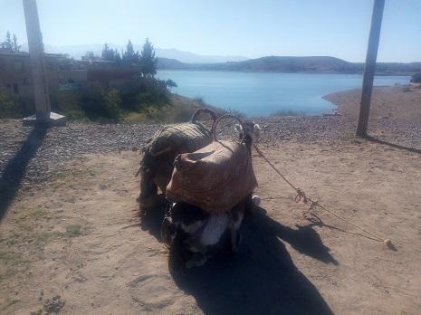 Balade Chameau Lac Lalla Takerkoust