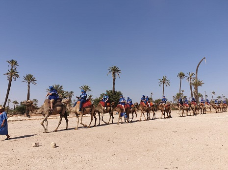Balade à dos de Dromadaire Marrakech
