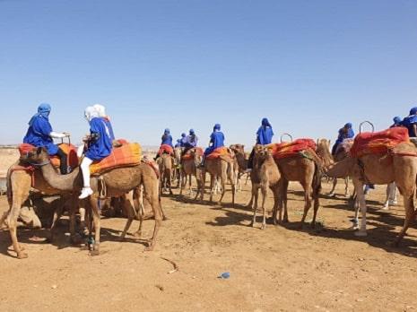 Chameau Près de Marrakech